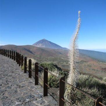 Tenerife – kolem a dokola