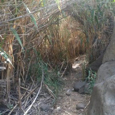 Sorrueda průchod rákosouvu džunglí